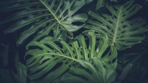 Creating Unique Experience: Grow Your Own Jungle