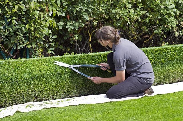 box-hedge-topiary